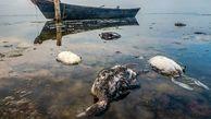 شکارچیان مسئولیت مرگ 20 هزار پرنده را در تالاب میانکاله برعهده گرفتند