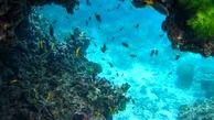 زندگی زیر آب شعار امسال روز جهانی محیط زیست