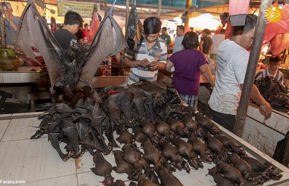 بازار فروش خفاش و سگ در چین باز شد/کند شدن کرونا باعث بازگشایی بازار دردسر آمیز چین شد