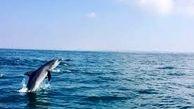 شنای نورانی دلفین ها در یکی از سواحل کالیفرنیا + فیلم