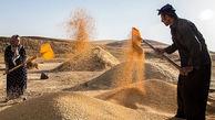 خرید تضمینی گندم در بهار 1400 بیش از 55 درصد افزایش داشت