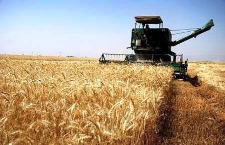واریز 54 میلیارد تومان به حساب گندمکاران برای خرید 13 هزار تن گندم انجام شد
