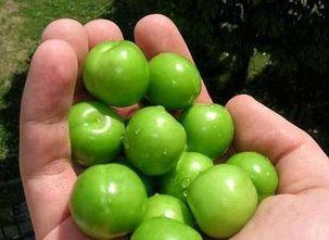 گوجه سبز کیلویی ۴۰۰ هزار تومان