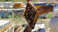 تولید عسل در کشور 24 درصد افزایش یافت