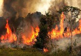 آتشسوزی در جنگلهای خائیز شهرستان کهگیلویه و بویر احمد