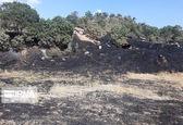 آتش سوزی جنگل های کرمانشاه به پایان رسید