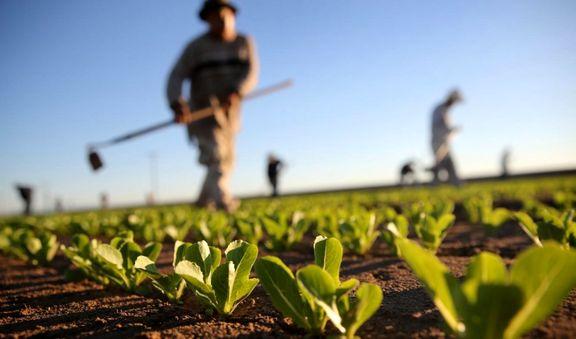نقد نابجای کشاورزی فراسرزمینی