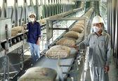 صنوف مرتبط با صنعت سیمان شناسامهدار خواهند شد/ احتمال حذف قیمتگذاری دستوری و دلالان صنعت سیمان در سال 1400