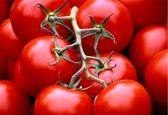 کاهش قیمت گوجه از 25 آذر / ۵۳ هزار تن سیب و پرتقال برای شب عید ذخیره شده است