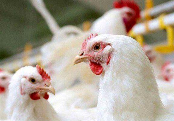 نماد معاملاتی شرکت مرغ مادر دیزباد با نماد «دیزباد» در فهرست نرخهای فرابورس ایران درج شد