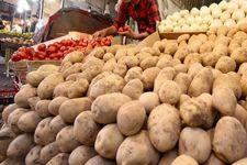 قیمت سیبزمینی طی ۱۵ روز آینده ارزان می شود