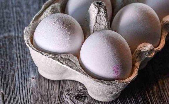 هر شانه تخم مرغ از خود مرغ گرانتر شد