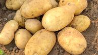 ستاد تنظیم بازار در مورد افزایش قیمت سیب زمینی جلسه تشکیل می دهد / وزارت جهاد کشاورزی پیگیری کند