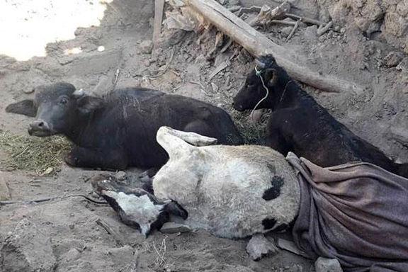 خسارت 300 میلیارد و  ۴۵۸ میلیون ریالی به بخش کشاورزی در مناطق زلزله زده آذربایجان شرقی