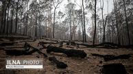 تصاویری از جنگل های استرالیا بعد از آنش سوزی