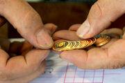 قیمت سکه 150 هزار تومان کاهش یافت