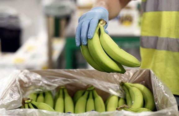 وزیر کشاورزی خواستار صدور مجوز واردات موز در ازای صادرات سیب شد