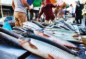 قیمت انواع ماهی شب عید/  هر کیلو ماهی قزلآلا بین ۲۹ تا ۳۲ هزار تومان