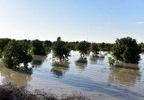 خسارت سنگین سیل به بخش کشاورزی 11 استان کشور