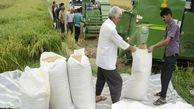 واردات برنج ممنوع شد/ صمت خیال برنجکاران را راحت کرد