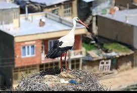 مرد مریوانی برای تعمیر به پشت بام خانه رفته که همسایه اش بطور سرزده به مهمانی میاد!
