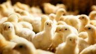 کاهش 50 درصدی تولید جوجهریزی در ماههای اخیر