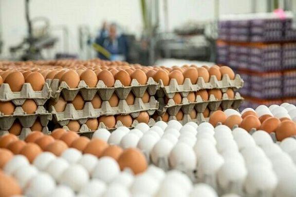 عرضه گسترده تخم مرغ با نرخ جدید از امروز