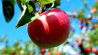 تولید بیش از 4 میلیون تن سیب در کشور