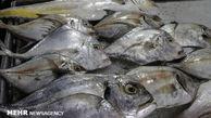 کاهش قیمت ماهی در بازار ماهی فروشان