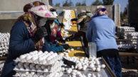 قیمت تخممرغ به کمتر از 5 هزار تومان رسید / قیمت تمام شده هر کیلو تخممرغ 10 هزار تومان است