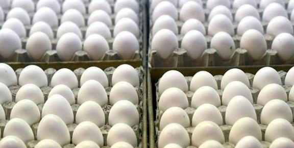 4 نهاد دولتی برای کنترل قیمت تخم مرغ وارد تولید این کالا شدند