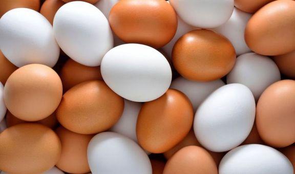 دولت نرخ جدید تخم مرغ را اعلام کند