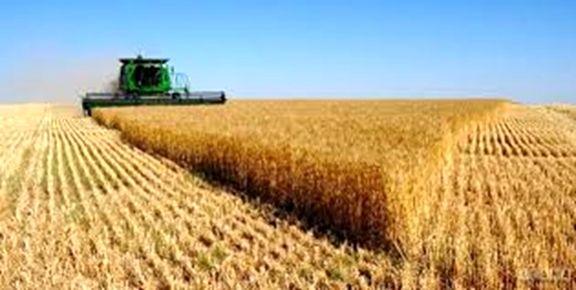 قیمت هر کیلو گندم که به کشور وارد می شود 6 هزار تومان است