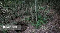 فروش خاک جنگل های شمال هر کیلو 2 هزار تومان