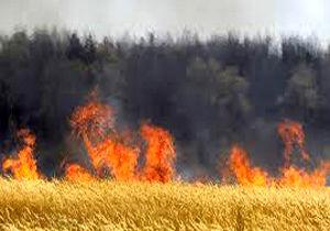 رعد و برق مزارع گندم در شهرستان فسا را به آتش کشید