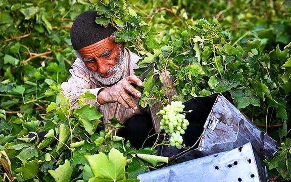 دنیا چقدر به محصولات کشاورزی ایران وابسته است؟