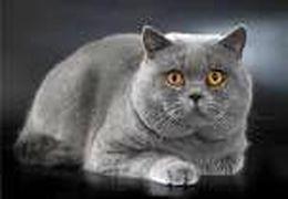 گربهای که در میان سخنرانی کشیش در نیایش صبحگاهی آنلاین از خود پذیرایی میکند