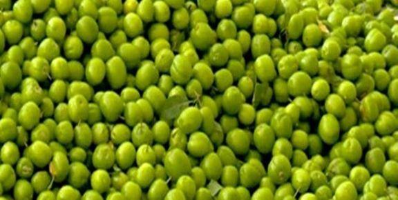 گوجه سبز  کیلویی با قیمت نجومی وارد بازار شد/ هر کیلو گوجه سبز 200 هزار تومان