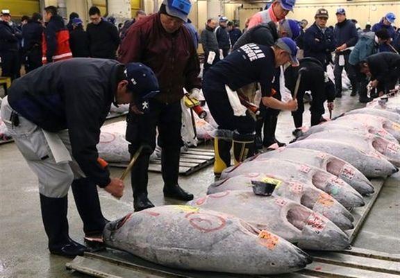 ایران دوازدهمین کشور صید کننده تون ماهیان در جهان است
