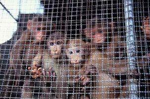دولت کلمبیا از دستگیری قاچاقچیان حیوانات و گونه های نادر گیاهی خبر داد
