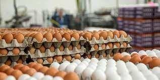 اولین محموله تخم مرغ نطفه دار پایان هفته جاری وارد کشور می شود