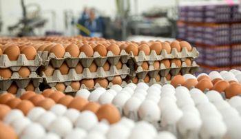 قیمت هر شانه تخممرغ در فروشگاههای زنجیرهای 31 هزار تومان است