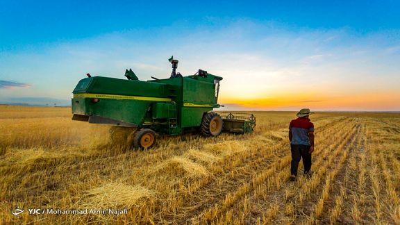 تولید گندم به ۸ میلیون تن می رسد