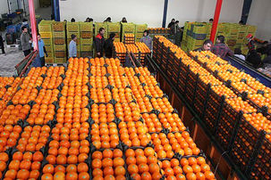 قیمت انواع میوه در بازار میوه و تره بار+جدول/ سیب کیلویی 8000 تومان