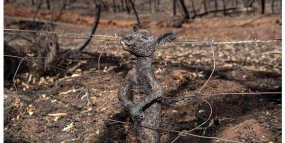 بیش از یک میلیارد حیوان در آتشسوزی استرالیا کشته شدند