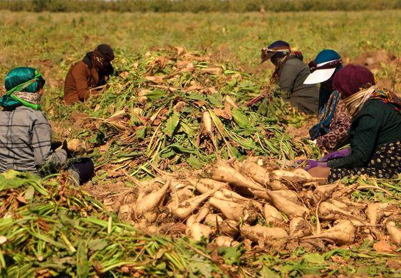 نرخ جدید خرید تضمینی محصولات کشاورزی در سال زراعی 99-98