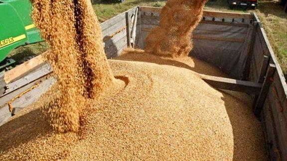 وزارت کشاورزی از شروع توزیع نهاده های دامی با قیمت مصوب دولتی خبر داد