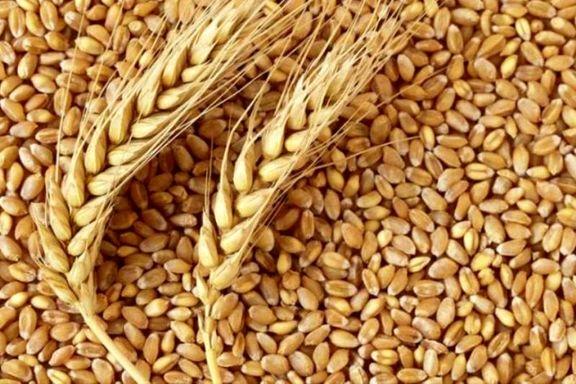 روند کاهشی قیمت جهانی گندم، متوقف شد/ ثبات در بازار برنج و شکر