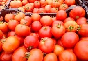 گرانی گوجه موقتی است/  هفتههای آینده کاهش مییابد