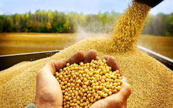 واردات نیمی از کالاهای اساسی کشور توسط دولت